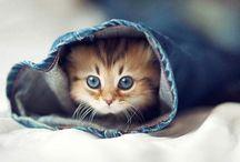 honden en katten / Leuke en schattige plaatjes van honden en katten.