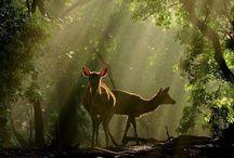 Magic forest / nella foresta e sui monti