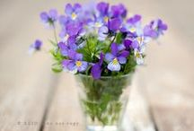 A pot of flowers...