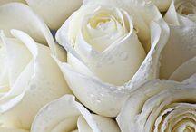 White & Ivory ❄ / tutto ciò che è bianco o color avorio