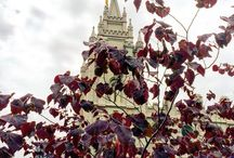 LDS Temples / Pictures of LDS Church Temples