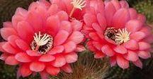 Kaktusy a tučnolisté rostliny- sukulenty