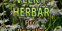 Rostliny-herbář, plody