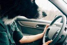 Vous / Car vous aussi, vous les aimez, vous partagez leur vie et vivez d'incroyables aventures avec eux.   #love #animaux #amour #pets - animaleco.com
