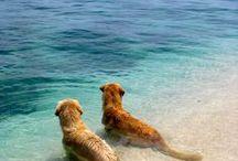 Voyage - Aux 4 coins du monde / Avec eux les voyages ont encore plus de couleurs, les paysages plus de relief et l'horizon toujours plus loin !   #Chien #dog #Animal #Pets #Voyage # Aventure  - animaleco.com