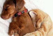 Animaux - Des câlins / Un peu de tendresse dans ce monde ! #câlin #amour #love #animaux #animal #pets - animaleco.com