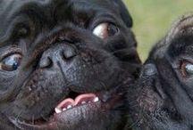 Faire le plein de bisous  - (Trop de love !) / Ils ont tellement mignon ! Quoi dire de plus ? #bisou #love #amour #animaux - animaleco.com