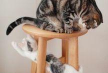 Joue beaucoup ! / Joue beaucoup ! Ils adorent jouer et c'est bien normal ! #animaux #jouet #rire - animaleco.com