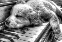 Finit par fatiguer - (Et ils sont encore plus mignons !) / Il faut bien qu'ils finissent par dormir, après tant d'activités !  #fatigue #dodo #sommeil #animaux #pets #animal - animaleco.com