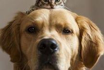 Animaux - Entre amis / Souvent ils nous donnent aussi de belles leçons, des exemples à suivre !  #ami #friends #animaux #pets #fraternité - animaleco.com