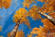 Autumn / by Troll Seller