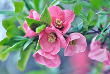 Flowers / by Troll Seller