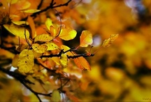 Autumn leaves / by Troll Seller