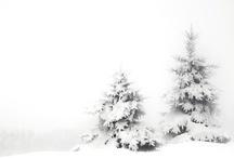 Winter  monochrome / by Troll Seller