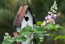 Birdhouses / by phil bennett