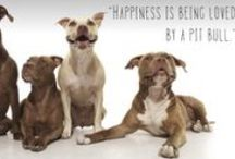 Peace, Love & Pitbulls Campaign / We are excited to be supporting peace love and pitbulls this week. One of the most commonly misunderstood dog breeds, PL&P rescues one Pitbull at a time from abusive situations and high-kill shelters and takes them home for a crash course in the PL&P bootcamp before working to find them a forever home in a loving family.   Want to help them continue to save more Pitbulls? SHARE this post to spread the word and SHOP: www.float.org - $8 from every sale is donated PL&P and their efforts.