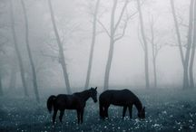 Horse&riding / Hevosia, ratsastuskuvia, talleja ja varuste/vaatemuotia liittyen aiheeseen