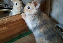 Bunnies / Bunnies, bunnies, and more bunnies!