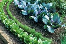 Vegetable Gardens / A collection of edible landscaping