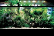 Controlled chaos. / Tropic to Nordic - aquascaping, reef tank design