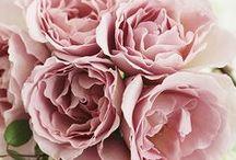 rose / !
