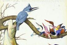 Trend   Birds