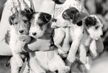 Dogs Vintage / by Phyllis Ecoff