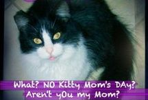 Kitty-Mews Muses