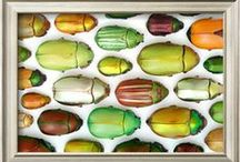 Trend   Scarab Beetle / A new trend in bugs!