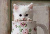 Kissanpentuja ja hiukan muitakin - Kittens and Cute Animals