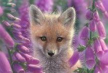 Sormustinkukat - Foxgloves