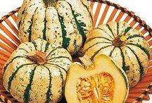 Kesä- ja talvikurpitsani - My Zucchinis and Pumpkins in 2015