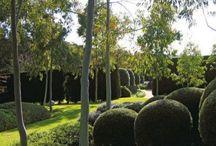 Road reserve planting / Westringea, correa, callistemon, native mint, grasses