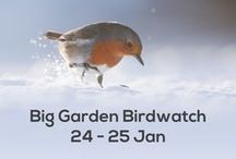 ♥Birding...♥ / Birds we have enjoyed watching and some of our own photographs