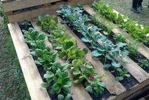 Garden (how to grow)