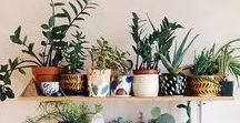 Let's Decorate! / Home decor inspirations