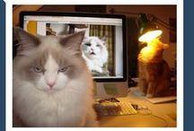 meow chicka meow meow /