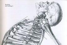 Anatomy, Painting, Drawing - tutorials
