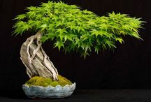 Beautiful Bonsai / by Lili Lily