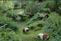 Outdoor Guinea Pig Ideas / guinea pigs can have wonderful, safe and happy lives outdoors as well as indoors. here are some cool ideas to make your outdoor-piggy's life even better!