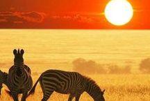 Born in Africa /