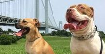 Staten Island Pets / Eye-catching photos from SILive and our readers.