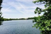 """Nature on Staten Island / Staten Island is the """"Borough of Parks,"""" and we have plenty to boast. From the Greenbelt to Bloomingdale Park, our borough has the most green space in New York City."""