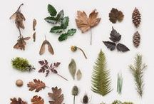 nature collection / a virtual nature collection to inspire my real-life nature collection/