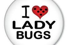 ladybug / joaninhas
