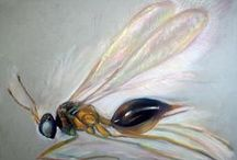 Most Recent Paintings / Painting done in the past few years of Insects as Patrice explores this world from under a microscope