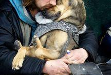 Animals / Love pets Animals and wildlife