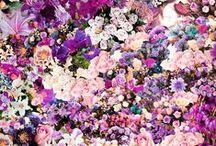 Blumen / Flora