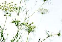 FLEURS / Sélection de belles photographies de fleurs.