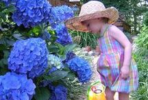 Hydrangeas / Hydrangeas are large flowers, made up of small flowers. They come in pastel colors. They grow on bushes and make beautiful flowers for cuttings, and then you can dry them to keep in baskets. / by Cyndi Reid
